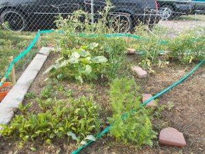 garden june 2014 003